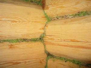 удепление деревянного дома мхом
